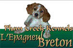 Plum Creek Kennels L'Epagneul Breton