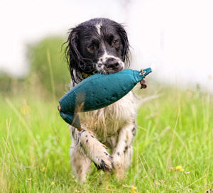Hunting Dog Training Supplies