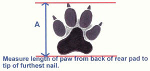 Measure length of paw from back of rear pad to tip of furthest nail.